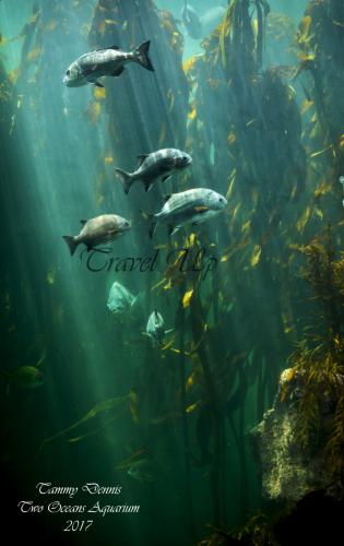 Two oceans AquariumCape Town